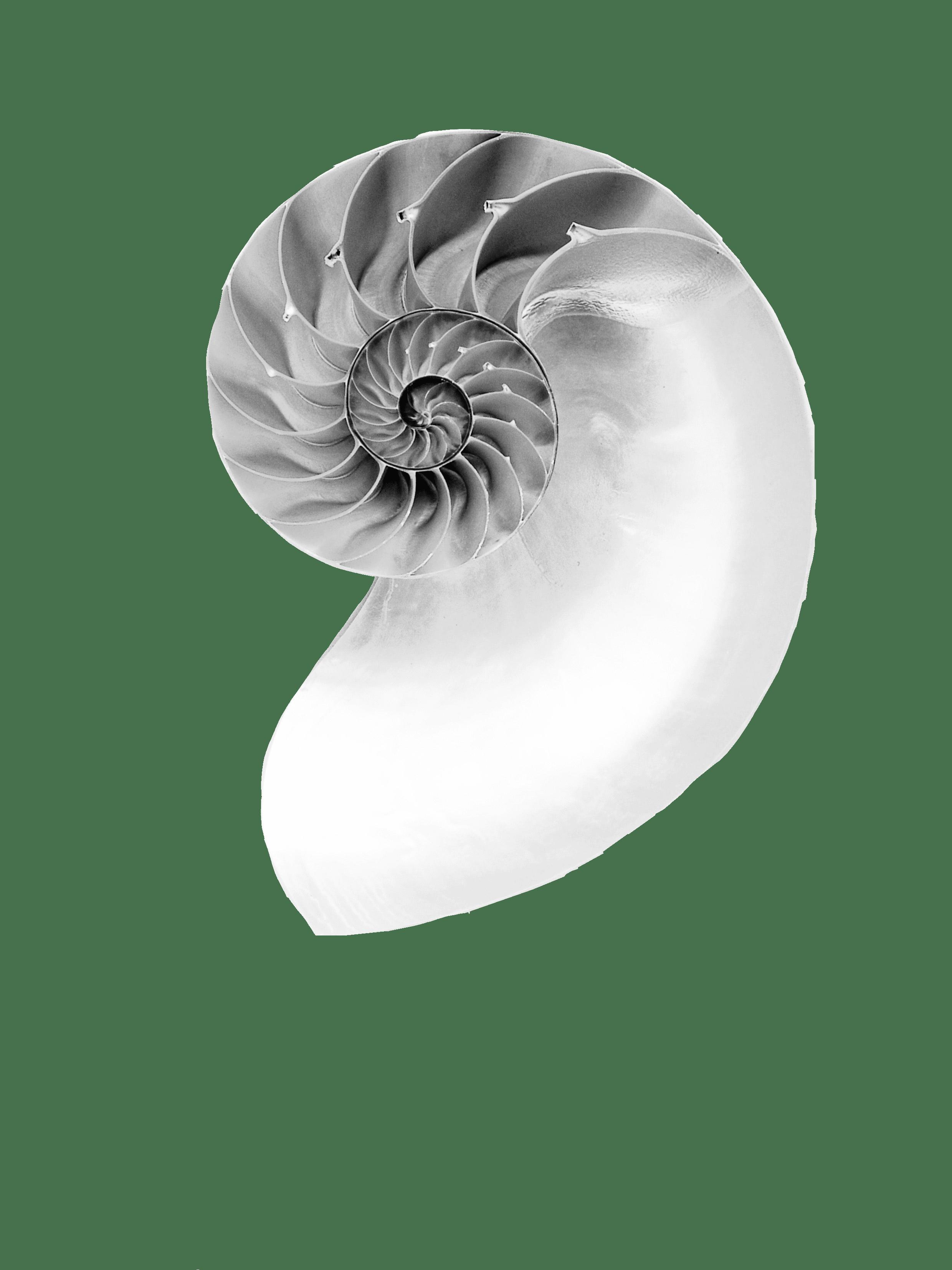 A circular mollusc - Responsible Business Awards 2020 - Connected Places award