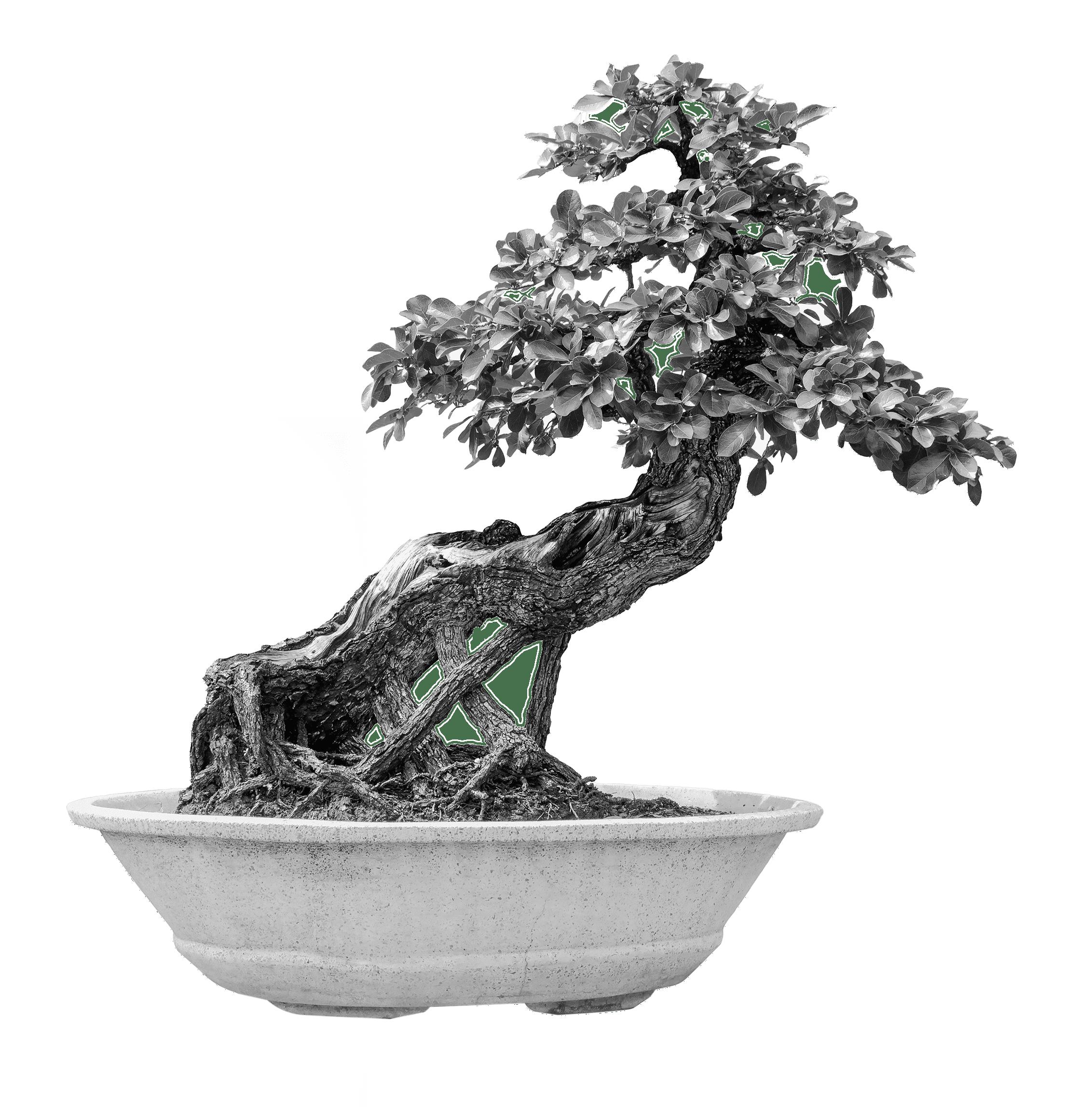 Black and white bonsai tree